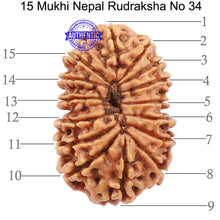 Load image into Gallery viewer, 15 Mukhi Rudraksha from Nepal - Bead No. 34