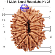 Load image into Gallery viewer, 15 Mukhi Rudraksha from Nepal - Bead No. 38