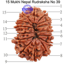 Load image into Gallery viewer, 15 Mukhi Rudraksha from Nepal - Bead No. 39