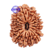 Load image into Gallery viewer, 15 Mukhi Rudraksha from Nepal - Bead No. 45