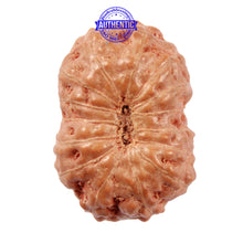 Load image into Gallery viewer, 15 Mukhi Indonesian Rudraksha - Bead No. 207