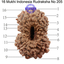 Load image into Gallery viewer, 16 Mukhi Rudraksha from Indonesia - Bead No. 205
