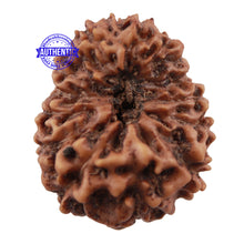 Load image into Gallery viewer, 16 Mukhi Rudraksha from Indonesia - Bead No. 2