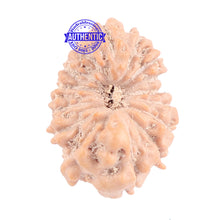 Load image into Gallery viewer, 16 Mukhi Rudraksha from Indonesia - Bead No. 164