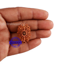Load image into Gallery viewer, 16 Mukhi Rudraksha from Nepal - Bead No. 63