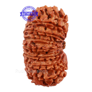16 Mukhi Rudraksha from Nepal - Bead No. 63
