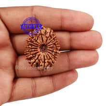 Load image into Gallery viewer, 16 Mukhi Rudraksha from Nepal - Bead No. 51