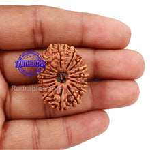 Load image into Gallery viewer, 16 Mukhi Rudraksha from Nepal - Bead No. 56