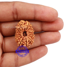 Load image into Gallery viewer, 16 Mukhi Rudraksha from Nepal - Bead No. 58