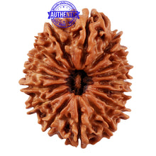 Load image into Gallery viewer, 16 Mukhi Rudraksha from Nepal - Bead No. 68