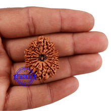Load image into Gallery viewer, 16 Mukhi Rudraksha from Nepal - Bead No. 70