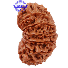 Load image into Gallery viewer, 16 Mukhi Rudraksha from Nepal - Bead No. 71