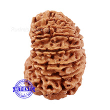 Load image into Gallery viewer, 16 Mukhi Rudraksha from Nepal - Bead No. 73
