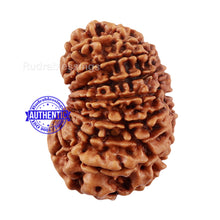 Load image into Gallery viewer, 16 Mukhi Rudraksha from Nepal - Bead No. 74