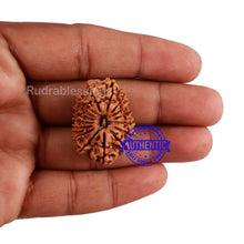 Load image into Gallery viewer, 16 Mukhi Rudraksha from Nepal - Bead No. 75