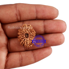 Load image into Gallery viewer, 16 Mukhi Rudraksha from Nepal - Bead No. 77