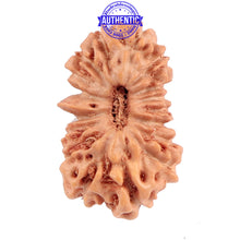 Load image into Gallery viewer, 17 Mukhi Rudraksha from Indonesia - Bead No. 128
