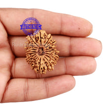 Load image into Gallery viewer, 17 Mukhi Nepalese Rudraksha - Bead No. 33