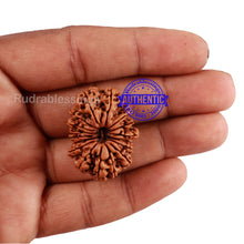 Load image into Gallery viewer, 17 Mukhi Nepalese Rudraksha - Bead No. 44