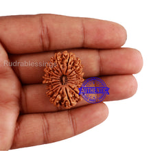 Load image into Gallery viewer, 17 Mukhi Nepalese Rudraksha - Bead No. 47