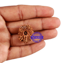 Load image into Gallery viewer, 17 Mukhi Nepalese Rudraksha - Bead No. 52