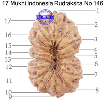 Load image into Gallery viewer, 17 Mukhi Rudraksha from Indonesia - Bead No. 146