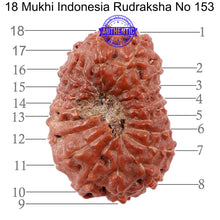 Load image into Gallery viewer, 18 Mukhi Rudraksha from Indonesia - Bead No. 153
