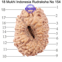 Load image into Gallery viewer, 18 Mukhi Rudraksha from Indonesia - Bead No. 154