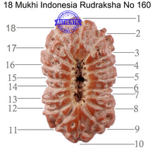 Load image into Gallery viewer, 18 Mukhi Rudraksha from Indonesia - Bead No. 160