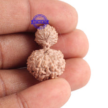 Load image into Gallery viewer, 18 Mukhi Gaurishankar Rudraksha from Indonesia - Bead No. 129