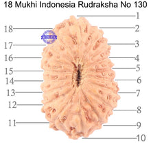 Load image into Gallery viewer, 18 Mukhi Rudraksha from Indonesia - Bead No. 130