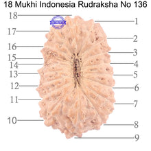 Load image into Gallery viewer, 18 Mukhi Rudraksha from Indonesia - Bead No. 136