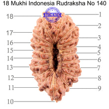 Load image into Gallery viewer, 18 Mukhi Rudraksha from Indonesia - Bead No. 140