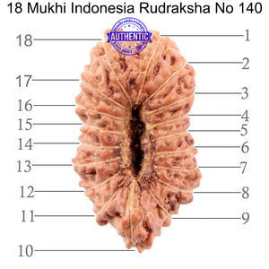 18 Mukhi Rudraksha from Indonesia - Bead No. 140