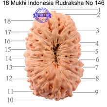 Load image into Gallery viewer, 18 Mukhi Rudraksha from Indonesia - Bead No 146