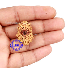 Load image into Gallery viewer, 18 Mukhi Rudraksha from Nepal - Bead No. 39