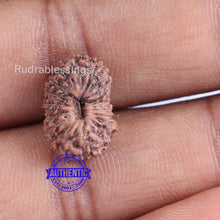 Load image into Gallery viewer, 19 Mukhi Indonesian Rudraksha - Bead 64