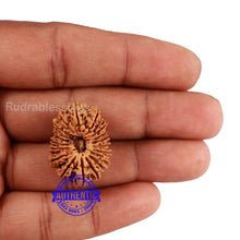 Load image into Gallery viewer, 19 Mukhi Nepalese Rudraksha - Bead No. 1