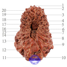 Load image into Gallery viewer, 20 Mukhi Indonesian Rudraksha - Bead 63