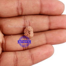 Load image into Gallery viewer, 20 Mukhi Indonesian Rudraksha - Bead 64