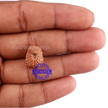 Load image into Gallery viewer, 20 Mukhi Indonesian Rudraksha - Bead 69