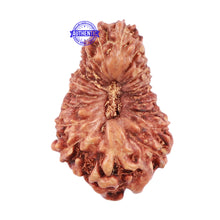 Load image into Gallery viewer, 22 Mukhi Rudraksha from Indonesia - Bead No O
