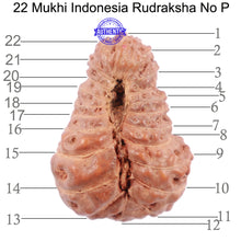 Load image into Gallery viewer, 22 Mukhi Rudraksha from Indonesia - Bead No P