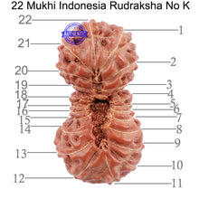 Load image into Gallery viewer, 22 Mukhi Rudraksha from Indonesia - Bead No. K