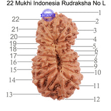 Load image into Gallery viewer, 22 Mukhi Rudraksha from Indonesia - Bead No L