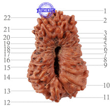Load image into Gallery viewer, 22 Mukhi Rudraksha from Indonesia - Bead No S