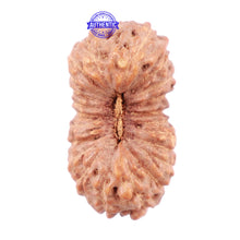 Load image into Gallery viewer, 23 Mukhi Rudraksha from Indonesia - Bead No. T