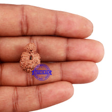 Load image into Gallery viewer, 24 Mukhi Rudraksha from Indonesia - Bead No. H
