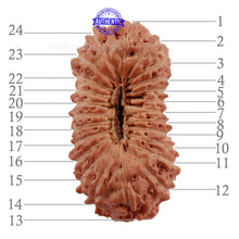 Load image into Gallery viewer, 24 Mukhi Rudraksha from Indonesia - Bead No. K