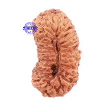 Load image into Gallery viewer, 25 Mukhi Rudraksha from Indonesia - Bead No. H